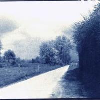Cyanotype Untitled