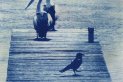 Cyanotype Three birds