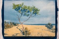 Cyanotype with acrylics My Lonly Tree