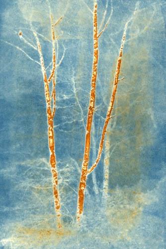 Vandyke over cyanotype Brightbark