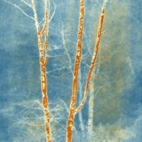 Vandyke over cyanotype Brightbark