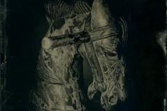 Ambrotype Horse