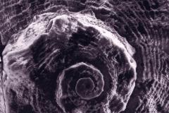 Carbon print Shell
