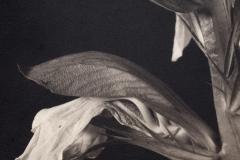 Salt print Tonge Close Up