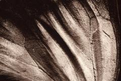 Salt print Wing 4