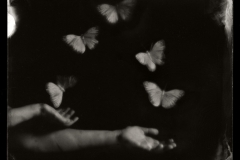 Wetplate collodion Juggling Butterflies