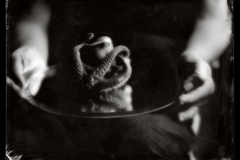 Wetplate collodion Octopus