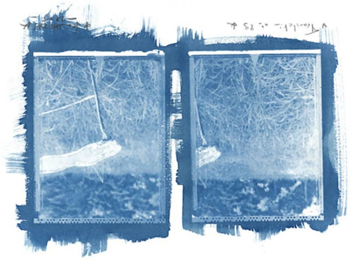Cyanotype-Jean-Daubas-Diptych