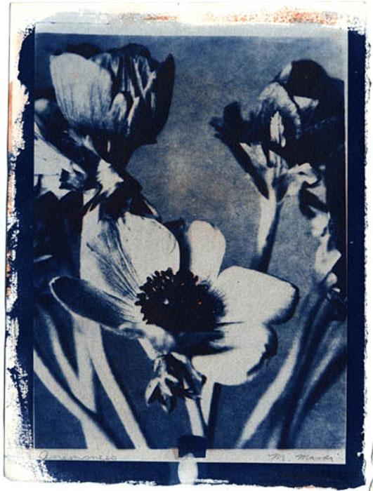 Gum-over-cyanotype-Maureen-Marion-Untitled