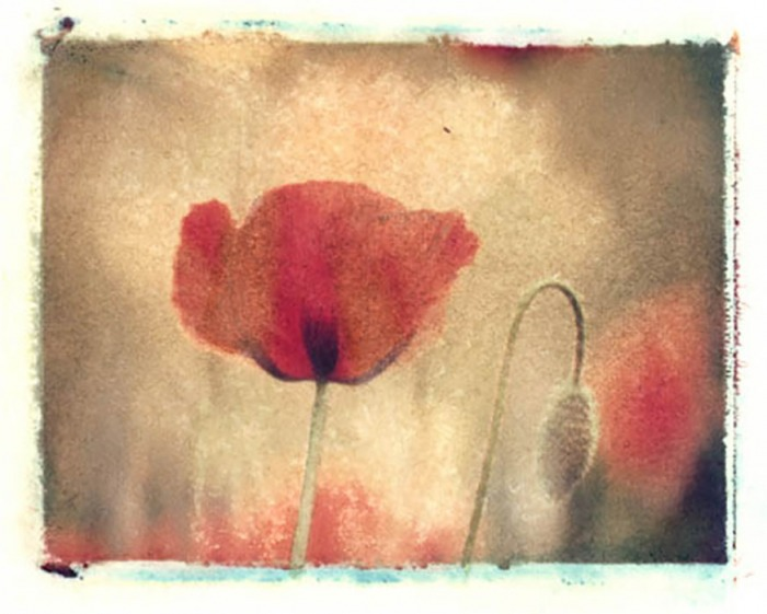 Polaroid-image-transfer-Jan-Harris-Summer