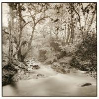John-Brewer-River-Taw