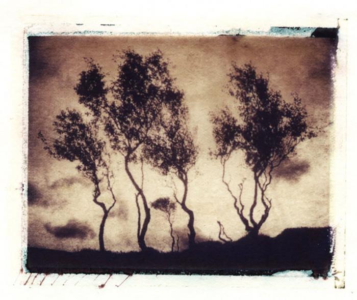 David-Harris-Skye-Trees