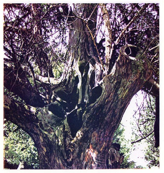 Helena-Cleary-Tree-Bole-Te