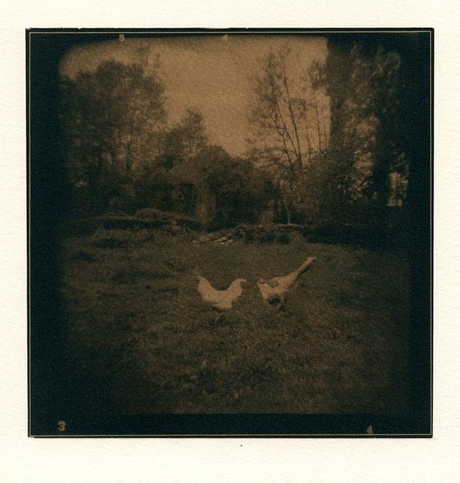 Jean-Daubas-In-the-Yard-Modified-Toned-Cyanotype