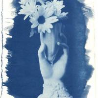 Cyanotype-Maureen-Marion-Daisies