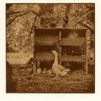 Jean-Daubas-The-goose-and-the-Rabbit-Toned-Van-Dyke-Brown