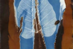Cyanotype and vandyke Leaf v3