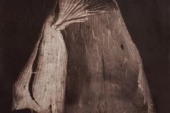 Vandyke Decaying Leaf Sapron