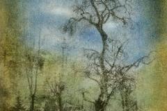 Bromoil The Dancing Plum Tree