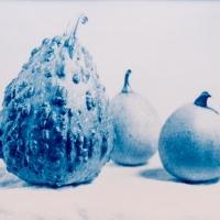 Cyanotype-forbiddenfruit