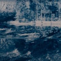Cyanotype-forestlake