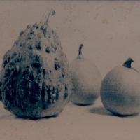 Cyanotype-toned-forbiddenfruit