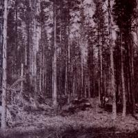 Vandyke-forest01