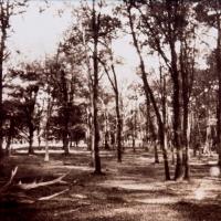 Vandyke-forest02