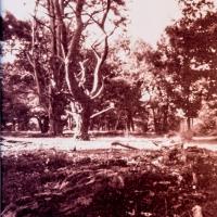 Vandyke-forest03