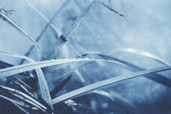 Cyanotype Garden No2