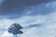 Cyanotype One Tree Hill