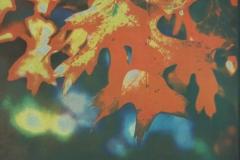 Gum bichromate Autumn Leaves