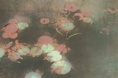 Gum bichromate Water Plants No1