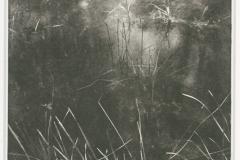 Photogravure Pond