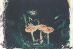 Polaroid transfer Mushrooms