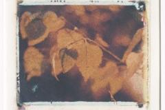 Polaroid transfer Orange Leaves
