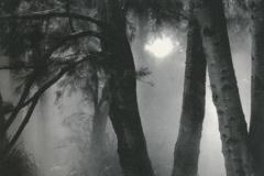 Ziatype Mist No1