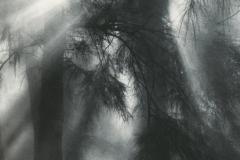 Ziatype Mist No2