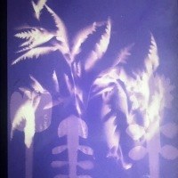 Photogram-Untitled-Botanicals-Real-and-Made-Pre-Fix