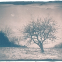 Cyanotype The Apple Tree