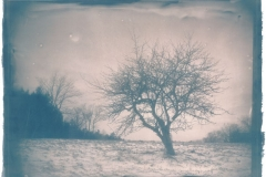 Cyanotype The Apple Tree