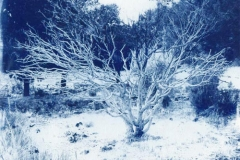 Cyanotype Untitled 1