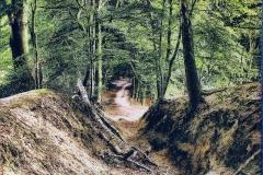 Gum bichromate Woods near Mook