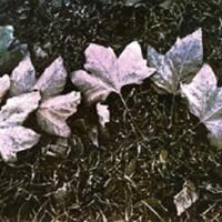 Temperaprint autumn