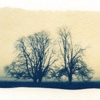 Cyanotype Trees