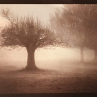 Albumen-3-trees