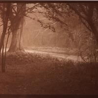 Albumen-forest-path