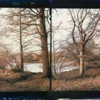 Gum-print-Forest-diptych