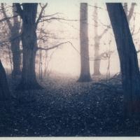 Gum-print-duotone-Forest