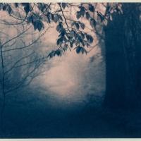 Gum-print-duotone-In-the-Mist